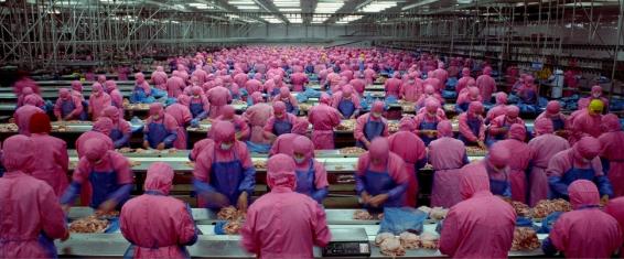 factoryworkerspink